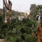 Rawan Tumbang, Dinas LH  Tebang Belasan Pohon