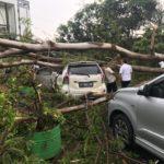 Kota Serang dilanda Hujan Deras dan Angin Kencang Sebabkan Padam Listrik Hingga Pohon Tumbang