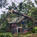 Akibat Angin Kencang dan Hujan Rumah Warga Di Tangsel Tertimpa Pohon Tumbang